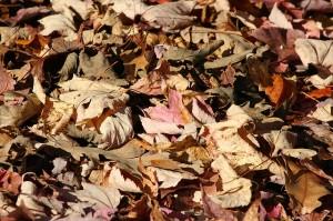 fallen-leaves-65544_640