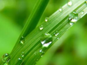 waterdrop-7720_640